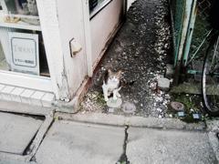 猫撮り散歩2015