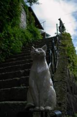 猫撮り散歩10S