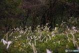 湿原の白いつかい2