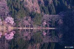 木々の映り込み