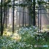 森に舞い降りる天使