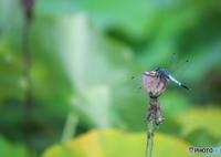 SONY ILCA-99M2で撮影した(羽休め)の写真(画像)