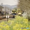 いすみ鉄道の春