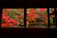 蓮華寺の額縁紅葉