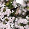 桜・リス シリーズ Ⅰ
