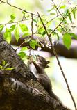 オチビちゃんと桜