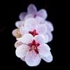 連なる生命の花