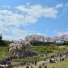 美春桜 6  ~ 三春滝桜に魅了される人々 ~