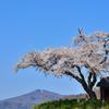 青空に映えて ~ 小沢の桜 ~ 2