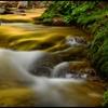 黄金の渓   ~ 美しき背戸の流れ ~