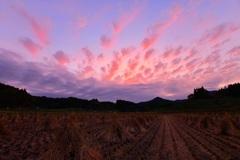 夕刻 ~初秋の田圃~