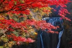 紅秋 ~袋田の滝~