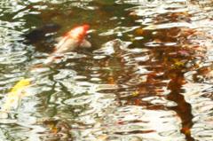 泳ぐ、秋景色