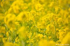 【春の香り】