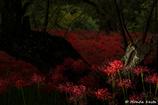 【魅惑色の赤い絨毯】