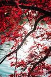 【秋の約束】