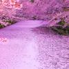春 -花筏-