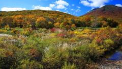 色彩の高原 I