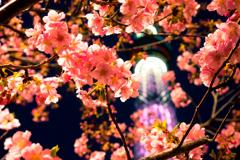 春色探し V