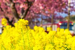 春色探し VII