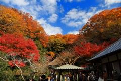 明月院の秋 I