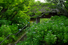 東慶寺はこれから