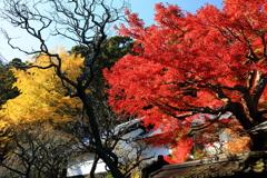 東慶寺の秋 I