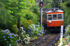 初夏の箱根 II