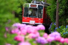 初夏の箱根 IX