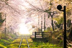 春 -桜の駅-
