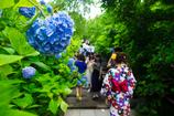 紫陽花の階段 I