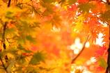 秋色探し II