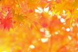 秋色探し III