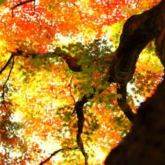 明月院の秋 VII