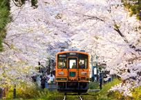 春 -桜のトンネル-