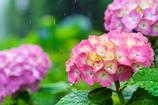 雨の箱根 VI