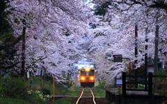 幻想風景 -桜トンネル-