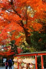 鶴岡八幡宮の秋 I