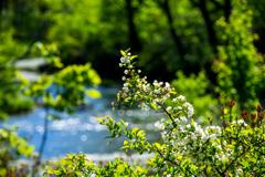 八甲田の春 IV
