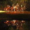 夜のフラミンゴ達