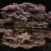 諸木野に咲く 2012