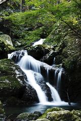 うぐいす滝2