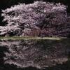 諸木野の春Ⅱ
