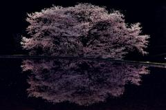 諸木野に咲く