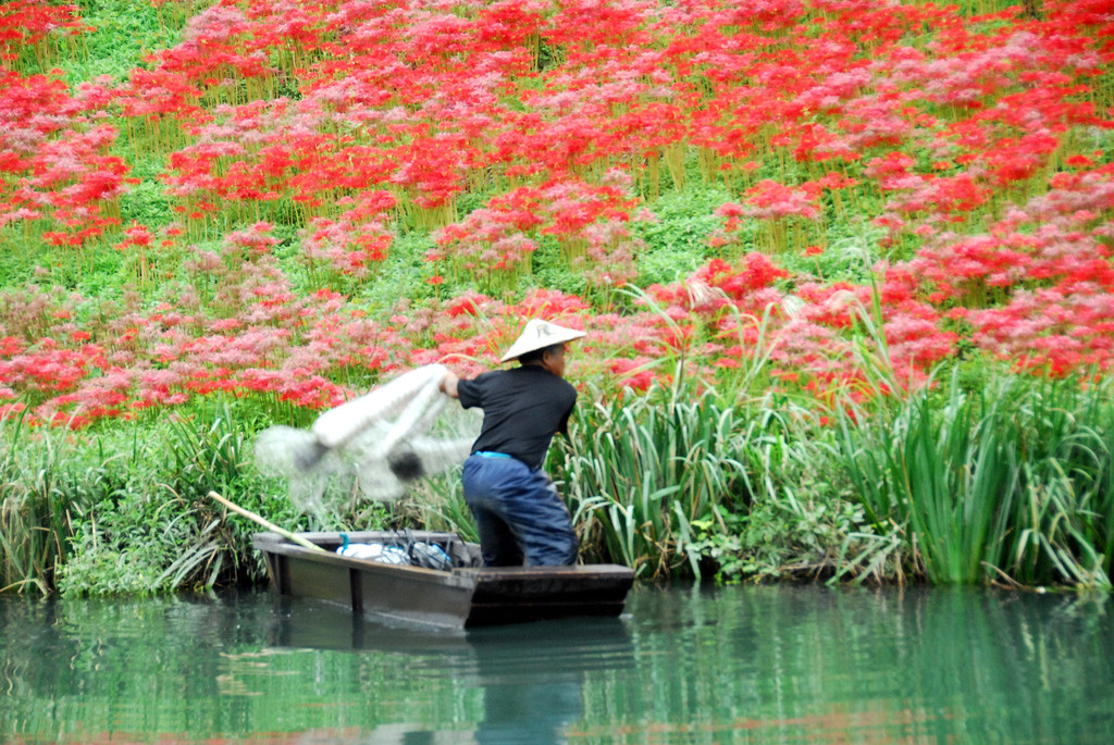 津屋川の彼岸花2008 9 25 D200 157
