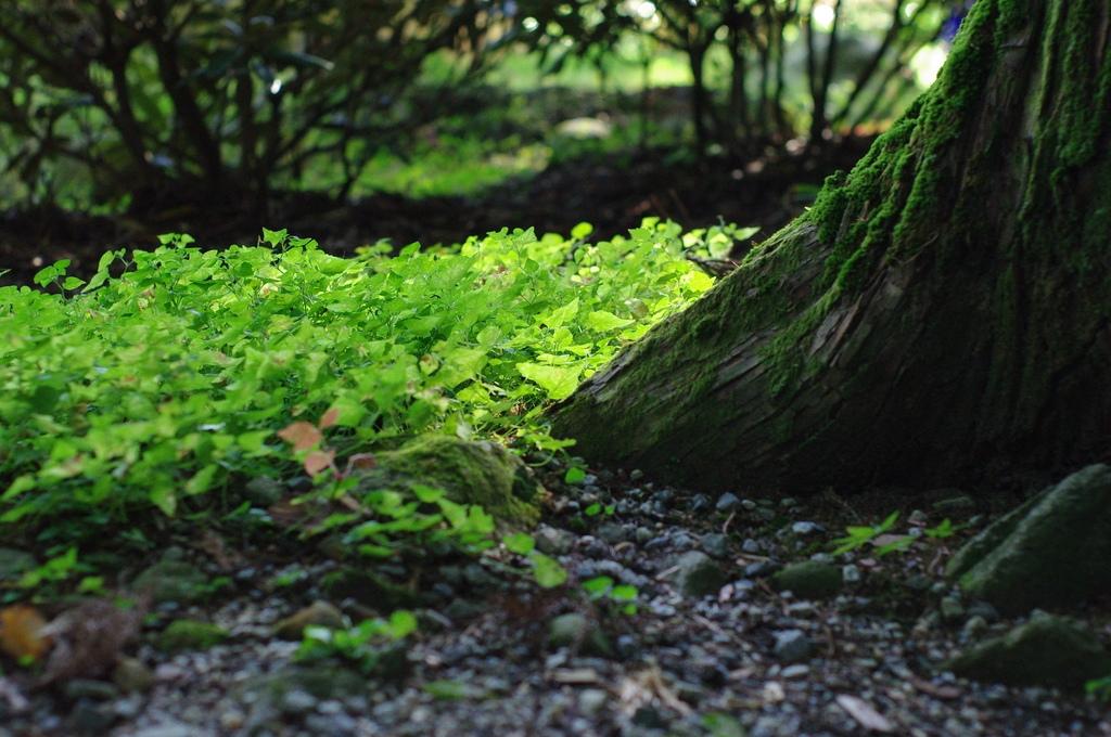 大杉と小さな芽