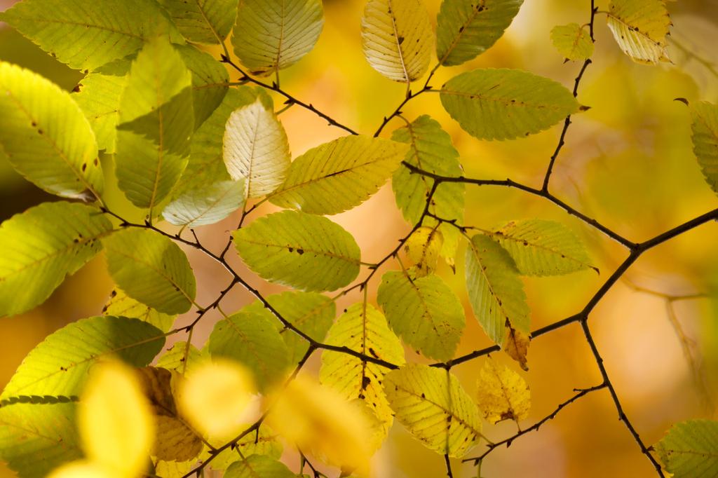 秋色のリズム