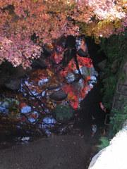 水の中の紅葉