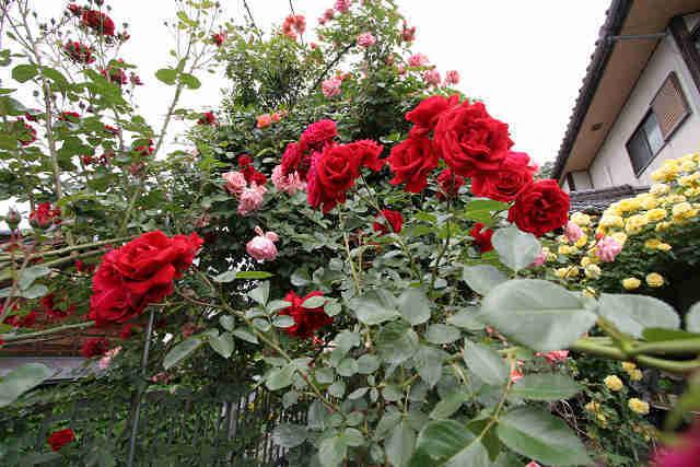 バラのある住宅
