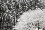 降る雪・・・